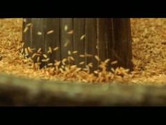 SARIDON POUND FILM.mov