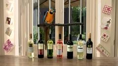 aldi_wine_parrot_MP4.mov